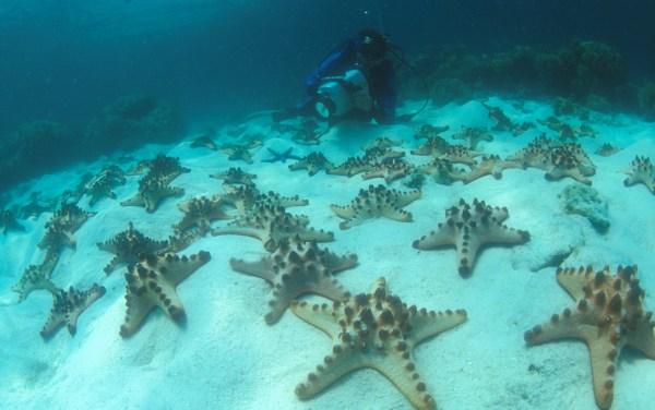 Starfish blog