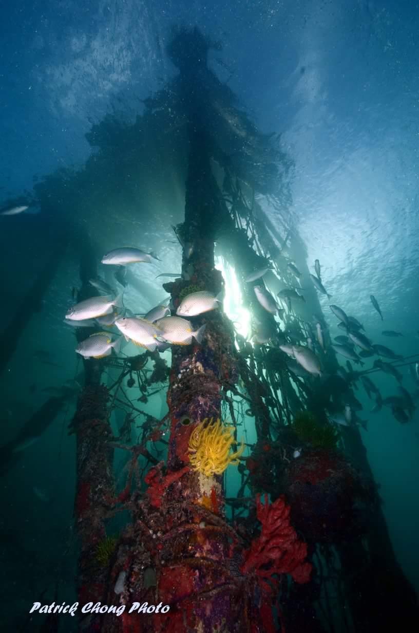 ropes-under-jetty